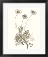 Framed Neutral Botanical Study VIII