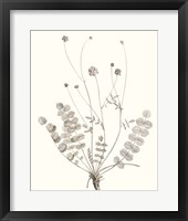 Neutral Botanical Study IX Framed Print