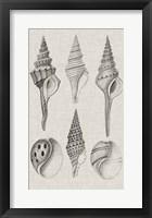 Framed Charcoal & Linen Shells II