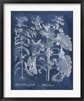 Framed Besler Leaves in Indigo I