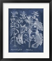 Framed Besler Leaves in Indigo I