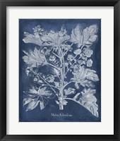 Framed Besler Leaves in Indigo II