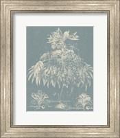 Framed Delicate Besler Botanical I