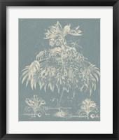 Delicate Besler Botanical I Framed Print