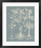 Delicate Besler Botanical II Framed Print