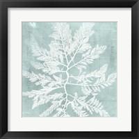 Framed Seaweed on Aqua I