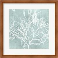 Framed Seaweed on Aqua II