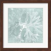 Framed Seaweed on Aqua III