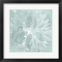 Seaweed on Aqua III Framed Print