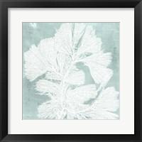 Framed Seaweed on Aqua IV