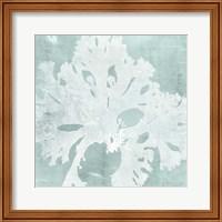 Framed Seaweed on Aqua V