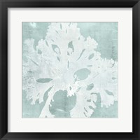 Seaweed on Aqua V Framed Print