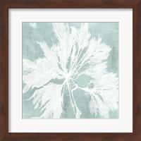 Framed Seaweed on Aqua VI
