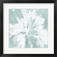 Seaweed on Aqua VI Framed Print