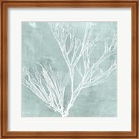 Framed Seaweed on Aqua VII