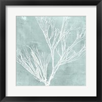Seaweed on Aqua VII Framed Print