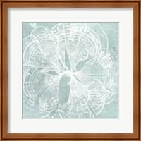 Framed Seaweed on Aqua VIII