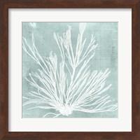 Framed Seaweed on Aqua IX