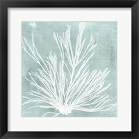 Framed Seaweed on Aqua IX