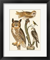 Framed Wilson Owls I