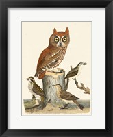 Framed Wilson Owls II