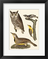 Framed Wilson Owls III