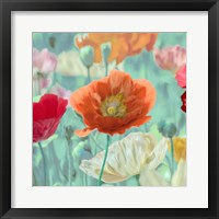 Framed Poppies in Bloom I