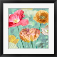 Framed Poppies in Bloom II