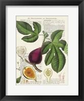 Framed Fruits de Saison, Figues