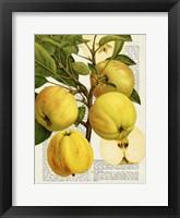 Framed Fruits de Saison, Pommes