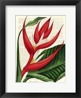 Framed Vintage Botany I