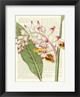 Framed Vintage Botany II