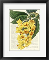 Framed Vintage Botany III