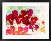 Framed Orchidreams