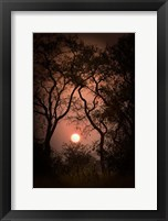 Framed Okavango Delta, Botswana Sunset Behind Tall Trees