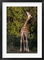 Framed Africa, Kenya, Nairobi, Langata, Hog Ranch