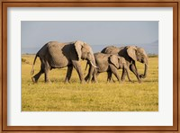 Framed Africa, Kenya, Amboseli National Park, Elephant