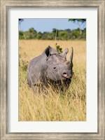 Framed Kenya, Maasai Mara National Reserve, Black Rhinoceros
