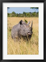 Framed Kenya, Maasai Mara National Reserve, Black Rhinoceros