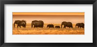 Framed Etosha National Park, Namibia, Elephants Walk In A Line At Sunset