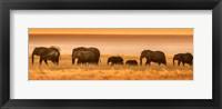 Framed Etosha National Park, Namibia, Elephants Walk In A Line At Sunset