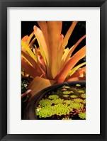 Framed Potted Plant, Cairns Botanic Gardens, Queensland, Australia