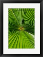 Framed Pattern On Palm Leaf, Cairns Botanic Gardens, Queensland, Australia