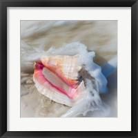 Framed Bahamas, Little Exuma Island Conch Shell In Surf