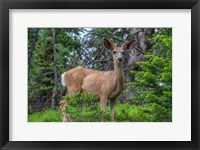 Framed Deer In The Assiniboine Park, Canada