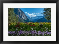 Framed Wildflowers In Banff National Park