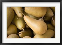Framed Canada, British Columbia, Cowichan Valley Close-Up Of Harvested Pears