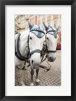 Framed Czech Republic Horses On Cobblestone Karlovy Vary Street