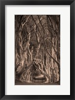 Framed Beech Tree-Lined Road Known As The Dark Hedges, County Antrim, Northern Ireland