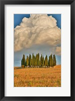 Framed Italy, Tuscany Cypress Tree Grove And Towering Cloud Formation